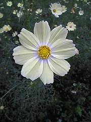 Image523