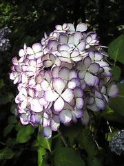 Image681