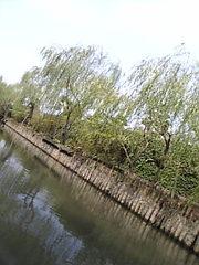Image984